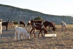 Paesaggio del nord degli agricoltori del Cipro Immagini Stock Libere da Diritti