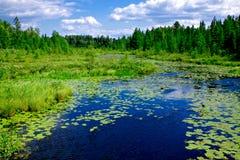 Paesaggio del nord di Wisconsin di legni Immagini Stock