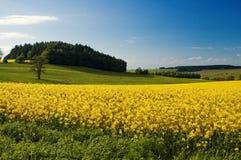 Paesaggio del paese Immagine Stock Libera da Diritti