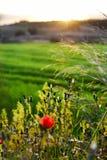 Paesaggio del paese al tramonto Fotografie Stock