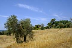Paesaggio del paese da Orvieto a Todi, Umbria, Italia Fotografie Stock Libere da Diritti