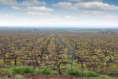 Paesaggio del paese della vigna Fotografie Stock