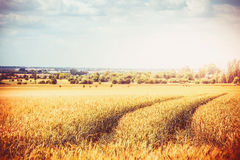 Paesaggio del paese di fine dell'estate o di autunno con il campo dell'azienda agricola di agricoltura e le tracce di macchinario immagine stock libera da diritti