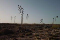 Paesaggio del paese di Lampedusa fotografie stock libere da diritti