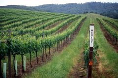 Paesaggio del paese di vino Immagine Stock