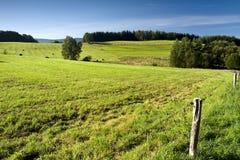 Paesaggio del paese: fiume, mucche e foresta Fotografia Stock