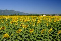 Paesaggio del paese fra Rieti Lazio e Terni Umbria Fotografia Stock