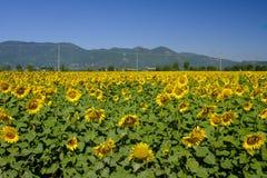 Paesaggio del paese fra Rieti Lazio e Terni Umbria Fotografie Stock