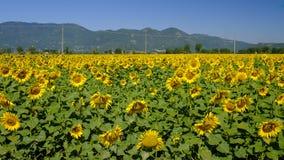 Paesaggio del paese fra Rieti Lazio e Terni Umbria Immagini Stock