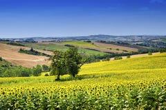 Paesaggio del paese Marche (in Italia) Fotografie Stock Libere da Diritti