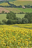 Paesaggio del paese Marche (in Italia) Fotografia Stock