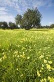 Paesaggio del paese in primavera Immagini Stock Libere da Diritti