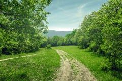 Paesaggio del paese, strada non asfaltata nella radura della foresta, giorno di estate soleggiato Fotografia Stock