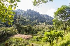 Paesaggio del Panama Boquete, traccia del quetzal Immagini Stock Libere da Diritti