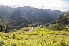 Paesaggio del Panama Boquete, traccia del quetzal Fotografie Stock Libere da Diritti