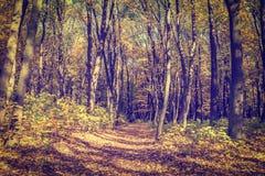 Paesaggio del parco di caduta Fotografie Stock Libere da Diritti
