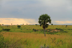 Paesaggio del parco di Murchison Falls Fotografia Stock Libera da Diritti