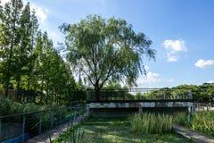 Paesaggio del parco di Seonyudo fotografia stock libera da diritti