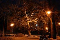 Paesaggio del parco di Snowy Fotografia Stock Libera da Diritti