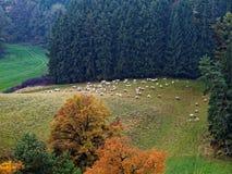 Paesaggio del parco naturale alla caduta in alpi sveve con le pecore Immagine Stock Libera da Diritti