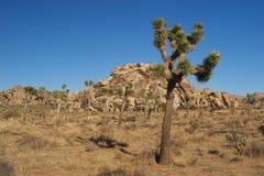 Paesaggio del parco nazionale dell'albero di Joshua immagini stock libere da diritti