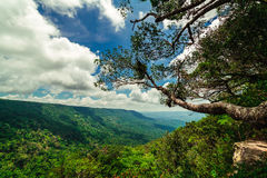 Paesaggio del parco nazionale della Tailandia immagini stock libere da diritti