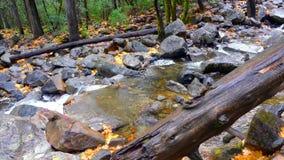 Paesaggio del parco nazionale di Yosemite, California, U.S.A. della natura immagini stock