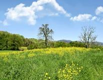Paesaggio del pascolo della primavera Fotografie Stock Libere da Diritti