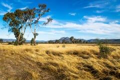Paesaggio del pascolo nel cespuglio con le montagne di Grampians nei precedenti, Victoria, Australia fotografia stock libera da diritti