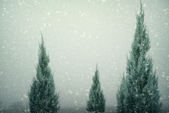 Paesaggio del pino o dell'abete dell'albero di Natale con le precipitazioni nevose sul fondo del cielo nell'inverno Immagine Stock