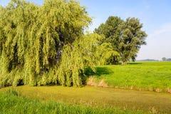Paesaggio del ploder con un grande albero di salice piangente nel foregro Fotografia Stock Libera da Diritti