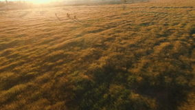 Paesaggio del prato al tramonto con i ciclisti video d archivio