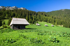 Paesaggio del prato dell'alta montagna Fotografia Stock