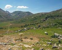 Paesaggio del prato della montagna con il cavallo bianco guardante fisso fotografia stock libera da diritti