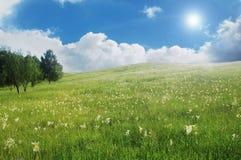 Paesaggio del prato di estate Fotografie Stock Libere da Diritti
