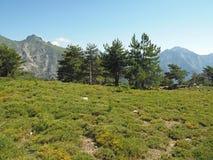 Paesaggio del prato di verde dell'alta montagna sui alpes corsician con Bi Fotografie Stock Libere da Diritti