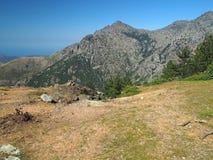 Paesaggio del prato di verde dell'alta montagna sui alpes corsician con il pi Immagini Stock