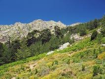 Paesaggio del prato di verde dell'alta montagna sui alpes corsician con il pi Fotografia Stock Libera da Diritti