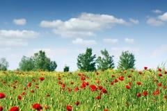 Paesaggio del prato del fiore dei papaveri Fotografia Stock Libera da Diritti