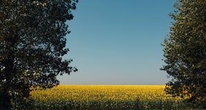 Paesaggio del prato del girasole di estate sul fondo del cielo blu Concetto di agricoltura della campagna Immagine Stock Libera da Diritti
