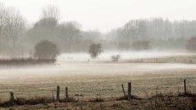 Paesaggio del prato nella nebbia Fotografie Stock