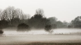 Paesaggio del prato nella nebbia Immagine Stock Libera da Diritti