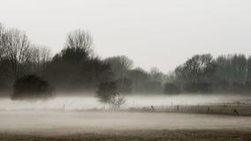 Paesaggio del prato nella nebbia Fotografia Stock