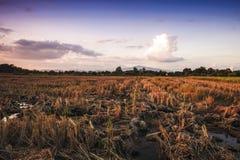 Paesaggio del raccolto del campo di agricoltura al tramonto di sera Fotografia Stock Libera da Diritti