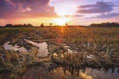 Paesaggio del raccolto del campo di agricoltura al tramonto di sera Immagine Stock