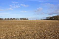 Paesaggio del raccolto dei wolds di Yorkshire Immagine Stock