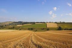 Paesaggio del raccolto della rappezzatura Fotografie Stock