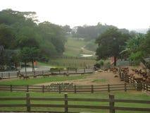 Paesaggio del ranch Immagini Stock