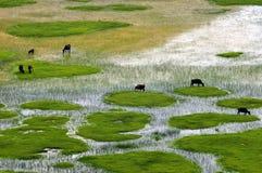 Paesaggio del ranch della Shangri-La Fotografia Stock