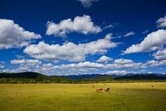 Paesaggio del ranch di Shangri-La Fotografia Stock